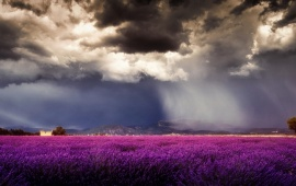 Storm Clouds Over Purple Field