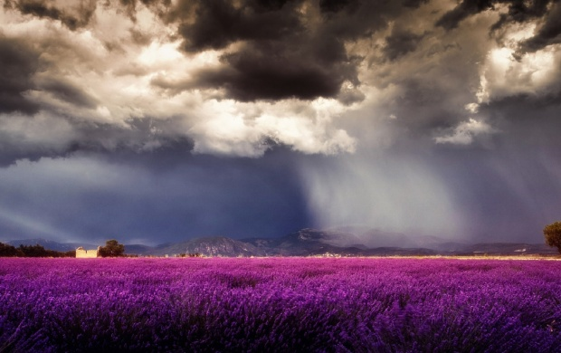 Storm Clouds Over Purple Field (click to view)