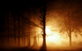 Strong Lights in Foggy Forest