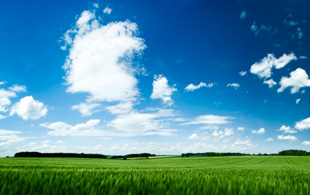 Summer Green Field and Blue Sky (click to view)