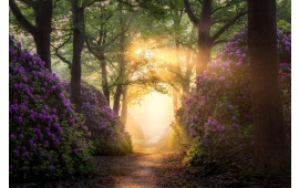 Sun Rays And Purple Flowers