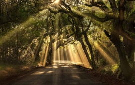 Sun Rays On The Forest Road