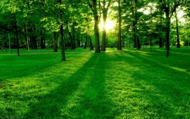 Sunlight In A Park