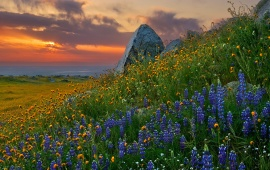 Sunset Flower Scenery