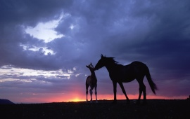 Sunset Horse Love