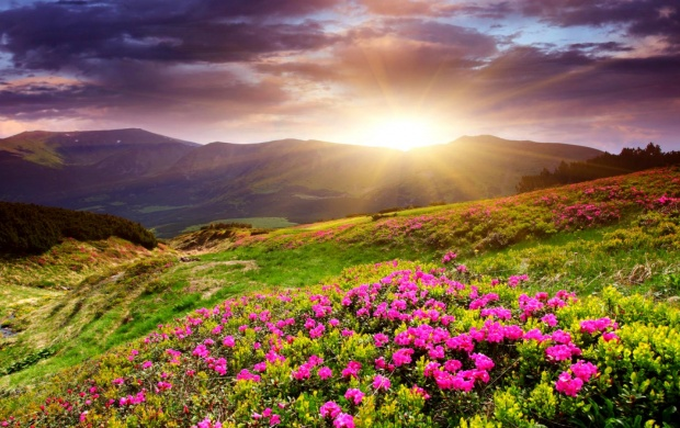 Sunset In Flower Field (click to view)