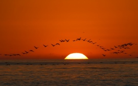 Sunset Sea Birds