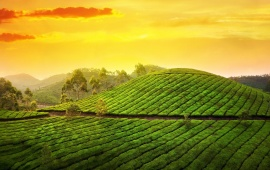 Sunset Tea Garden