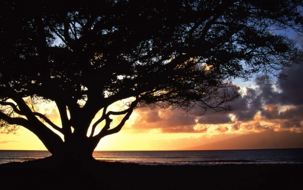 Sunset Under A Tree (click to view)