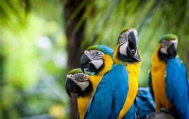 Sweet Macaw Parrots