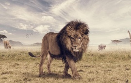 The Animal King Lion