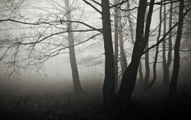 The Black Fog Forest Tree