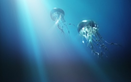 The Journey Of The Jellyfish