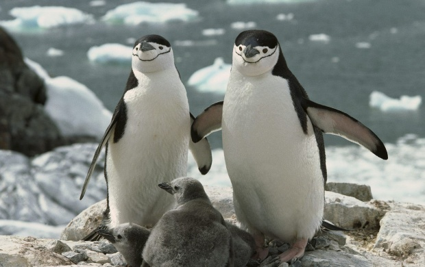 The Penguins Family (click to view)
