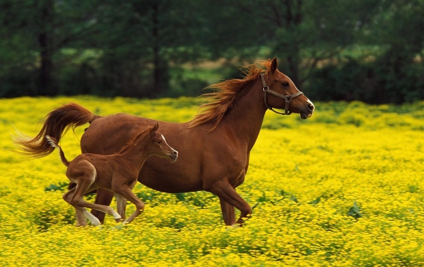 The Running Horses (click to view)