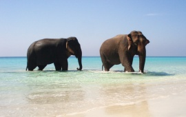 The Two Elephants On The Beach