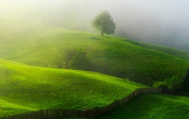 Thick Mist On Green Hills