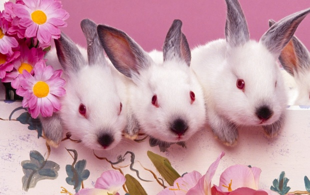 Three Easter Bunny (click to view)