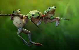 Three Frogs Funny Sitting Position