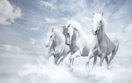 Three White Horses Running