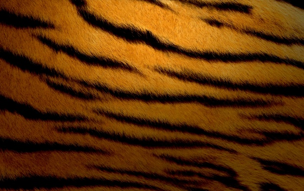 Tiger Stripes (click to view)