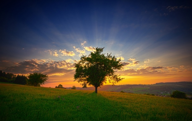 Tree And Sun Rays (click to view)