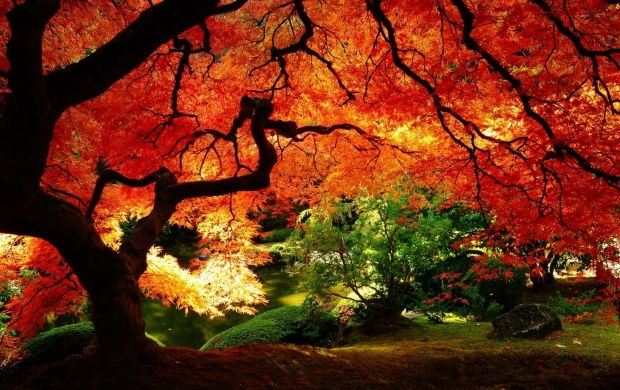 Tree In Autumn Colors (click to view)