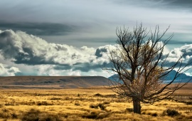 Tree In Steppe