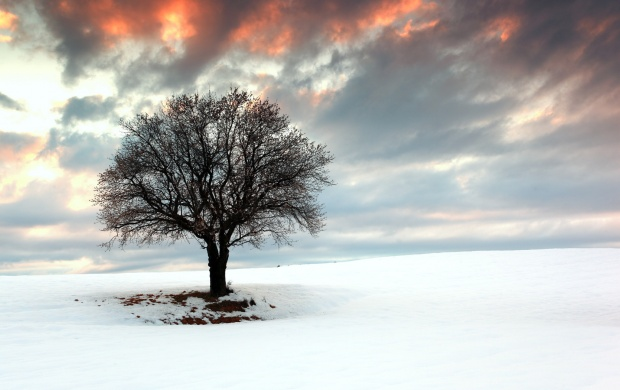 Tree Snow Landscape (click to view)