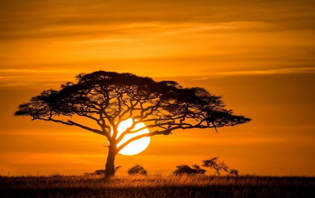 Tree Sunset (click to view)