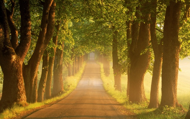 Trees Road (click to view)