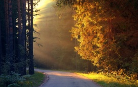 Trees Sun Rays On Road