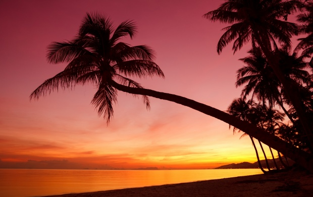 Tropical Sunset With Palm Trees (click to view)