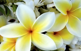 Tropical White and Yellow Flower