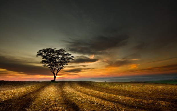 Twilight Tree (click to view)