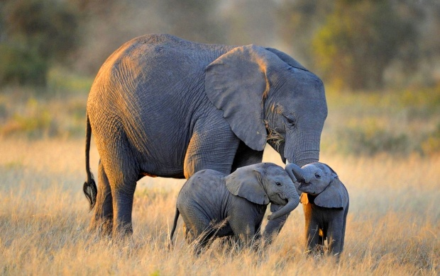 Twin Baby Elephants (click to view)