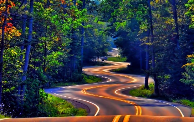 Twisty Road Through Forest (click to view)
