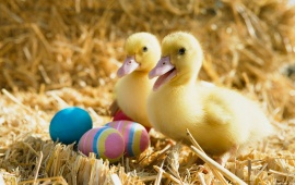 Two Duck With Easter Eggs