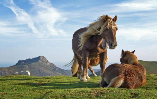 Two Horses Wallpaper (click to view)