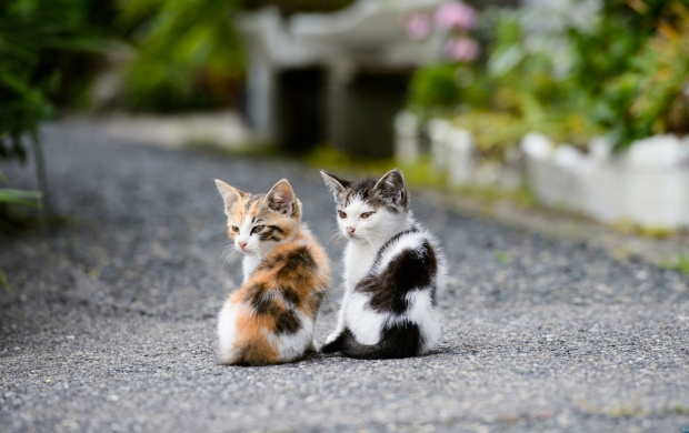 Two Kittens (click to view)
