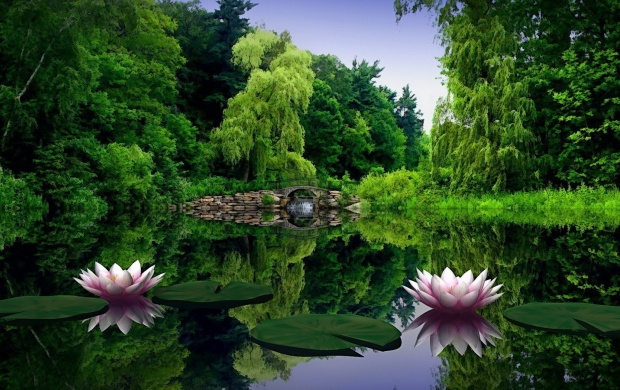 Two Water Lilies (click to view)