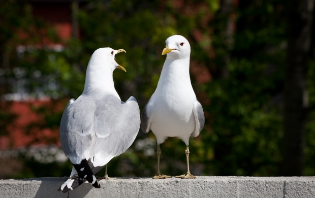 Two White Birds (click to view)