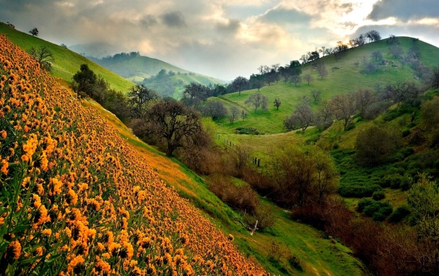 Valley Of Flowers (click to view)