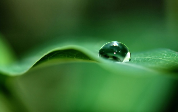 water drop on leef (click to view)
