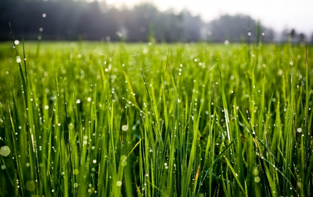 Water Drops On Grass (click to view)