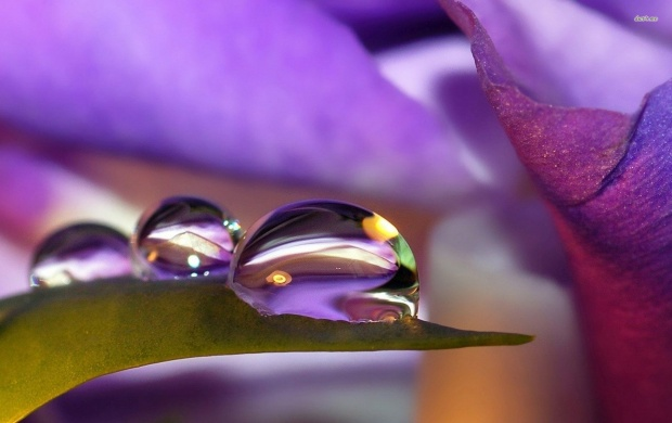 Water Drops on Purple Flower (click to view)