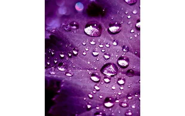 Water Drops Purple Background (click to view)