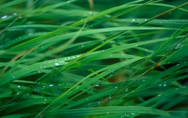 Waterdrops on the Grass