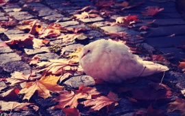 White Dove Autumn Leaves