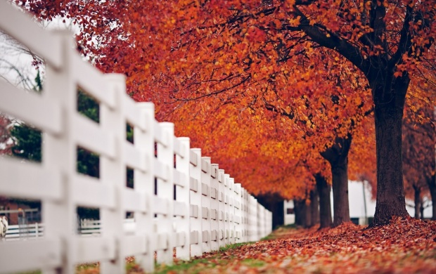 White Fence Autumn Trees Nature (click to view)